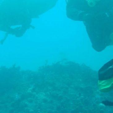Dykkere til Folketinget: Danmark forsømmer kulturarven